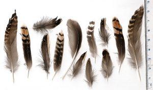 Ciri Ciri Burung