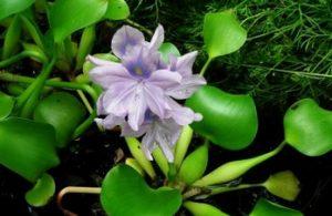 Tumbuhan yang dapat beradaptasi di daerah perairan
