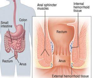 bagian anus