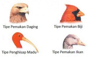 bentuk paruh pada burung