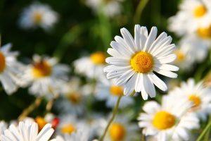 fungsi daun bagi tumbuhan