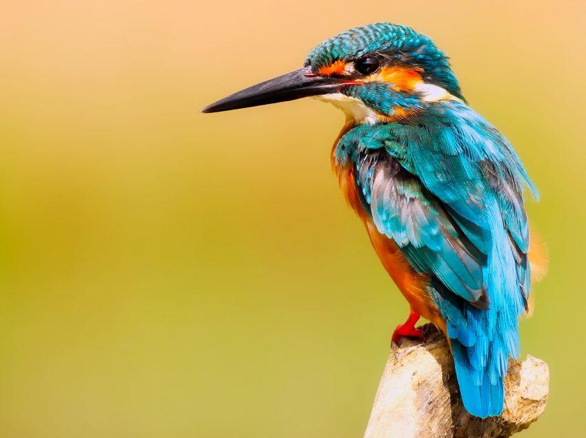 15 Ciri-Ciri Burung (Aves) Secara Umum
