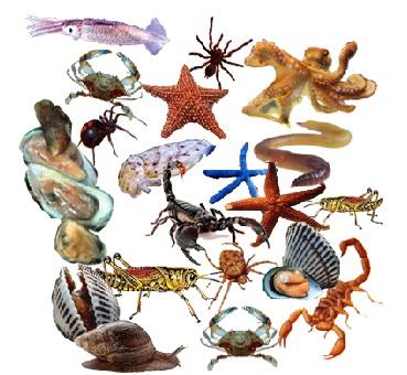 Sistem Gerak pada Hewan Invertebrata dan Contohnya