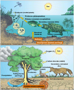 unsur lingkungan biotik