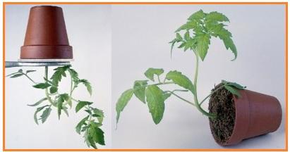 6 Jenis Gerak Tropisme pada Tumbuhan dan Contohnya