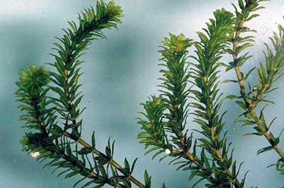 3 Sistem Gerak pada Tumbuhan Beserta Gambar dan Contohnya