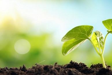 7 Faktor Eksternal Pertumbuhan dan Perkembangan Tumbuhan
