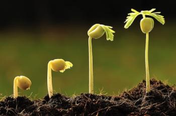 3 Faktor Internal Pertumbuhan dan Perkembangan Tanaman