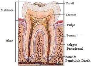 bagian gigi