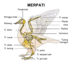 sistem saraf burung