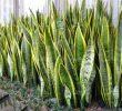 10 Contoh Tumbuhan Fitoremediasi dan Fungsinya