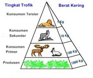 piramida biomassa daratan