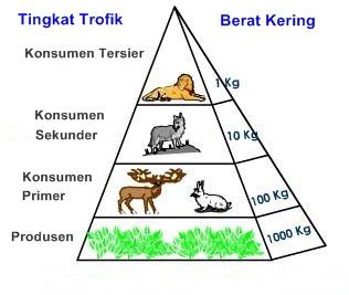 Piramida Biomassa : Jenis, Contoh, Kelebihan dan Kekurangannya