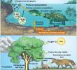 Unsur Lingkungan Biotik Berdasarkan Fungsi dan Tingkatan Organisme