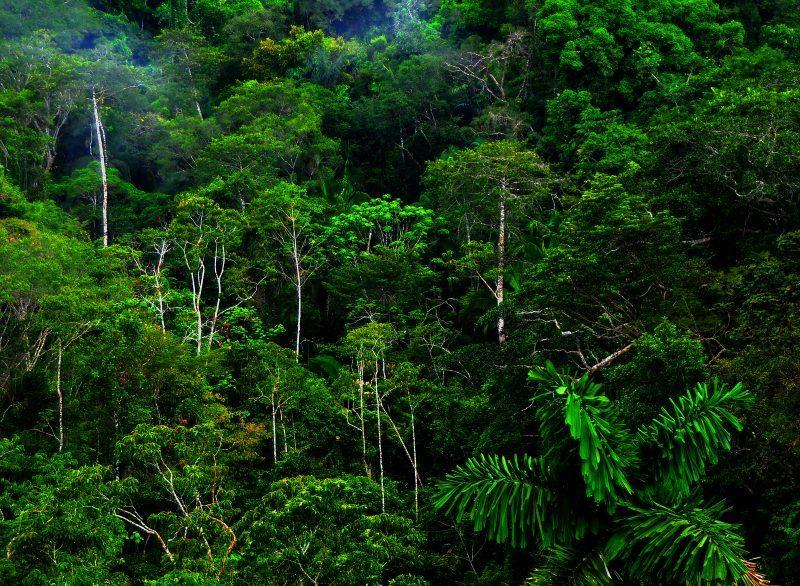 8 Ciri-Ciri Ekosistem Hutan Hujan Tropis Berdasarkan Vegetasi dan Sifatnya