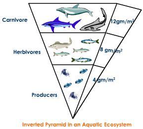 piramida-biomassa-terbalik