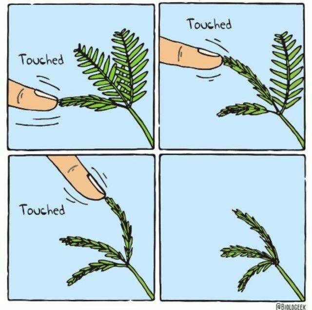 6 Macam Gerak Nasti pada Tumbuhan dan Contohnya