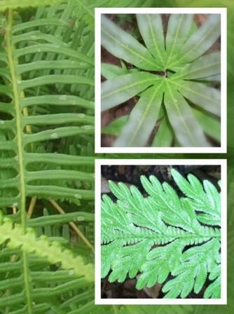 Contoh Tumbuhan Berpembuluh dan Jenis-Jenisnya