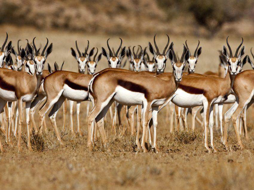 10 Contoh Fauna Ethiopia
