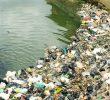8 Kegiatan Manusia yang Mempengaruhi Kehidupan Ekosistem