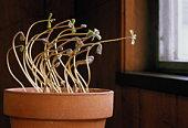 7 Contoh Adaptasi Tingkah Laku Pada Tumbuhan Yang Wajib Diketahui