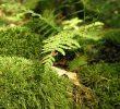 10 Contoh Adaptasi Fisiologi Pada Tumbuhan Yang Wajib Diketahui