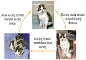 daur hidup kucing