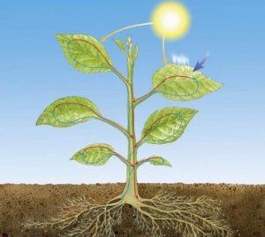 radiasi matahari dan tanaman
