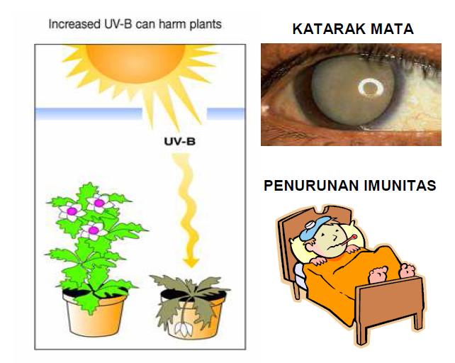 Dampak Penipisan Lapisan Ozon