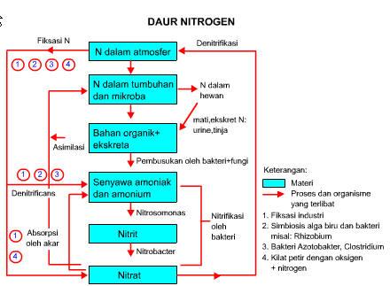 6 Proses Daur Nitrogen