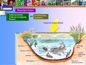 ekositem kolam