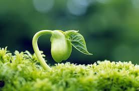 6 Hormon Tumbuhan: Jenis dan Penjelasannya