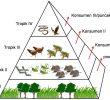 7 Komponen Biotik Penyusun Ekosistem (terlengkap)