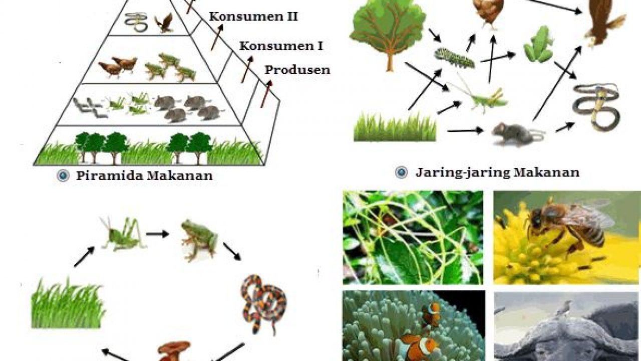 Contoh Interaksi Antar Komponen Biotik Materiipa Com