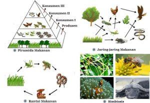 pola interaksi komponen biotik
