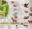 Nisia dalam Ekosistem : Pengertian – Jenis – Contoh