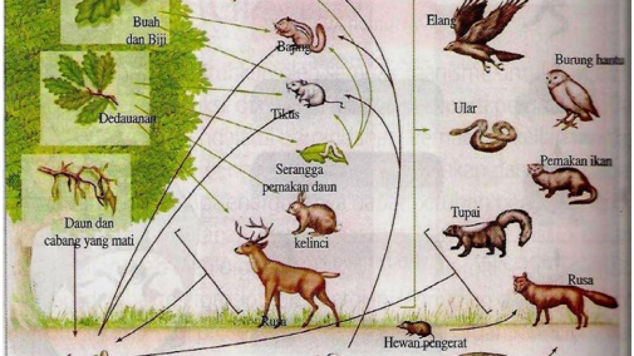 Nisia Dalam Ekosistem Pengertian Jenis Contoh Materiipa Com