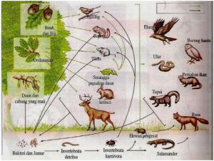 rantai makanan ekosistem hutan