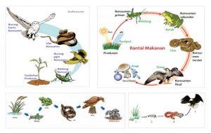 antai makanan ekosistem kebun