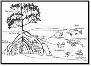 rantai makanan ekosistem rawa