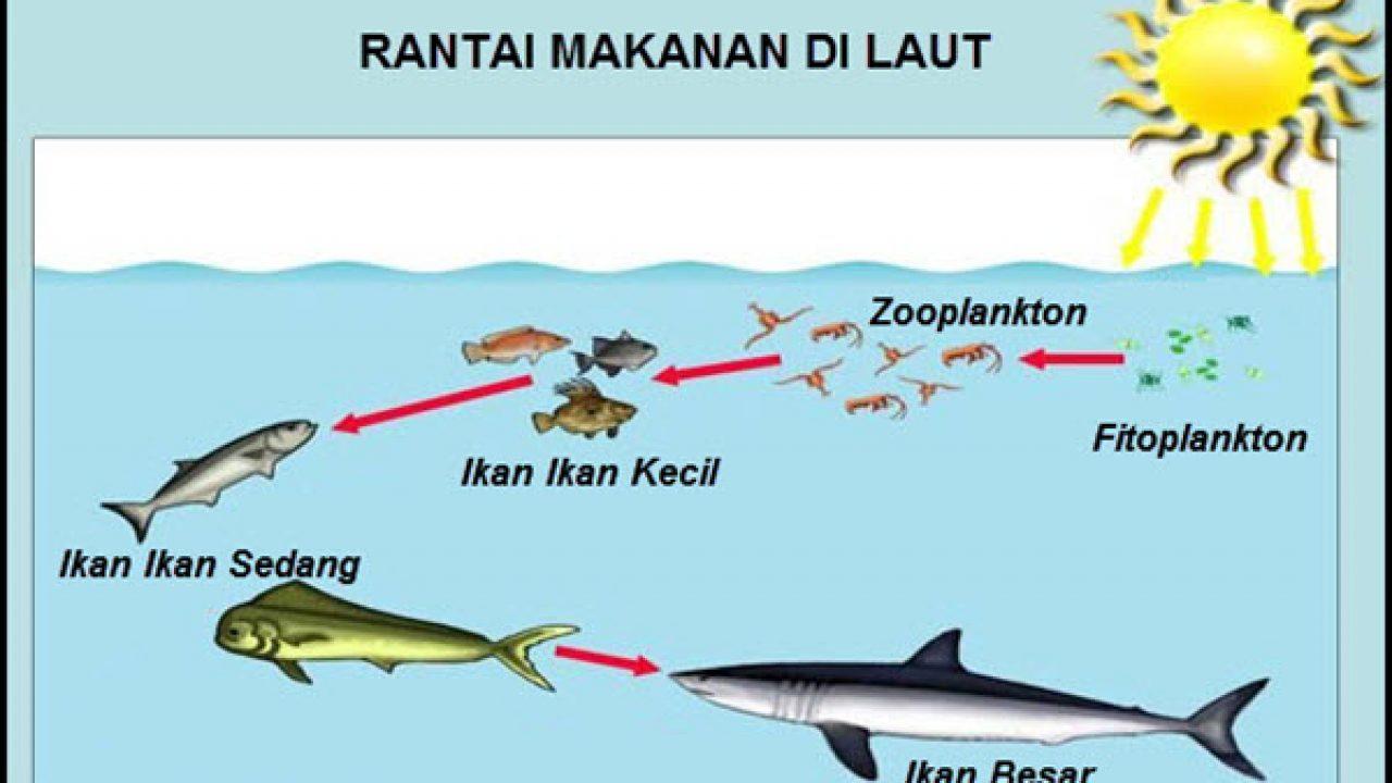 Rantai Makanan Ekosistem Laut Materiipa Com