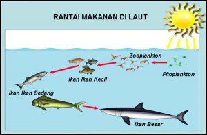 rantai_makanan_laut