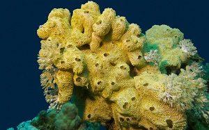 Sistem Gerak Porifera