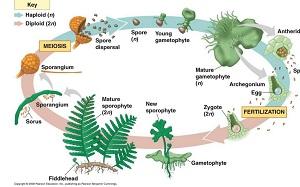 Perbedaan Metamorfosis dan Metagenesis