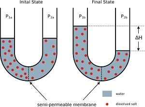Mengapa Membran Sel Bersifat Semipermeable?