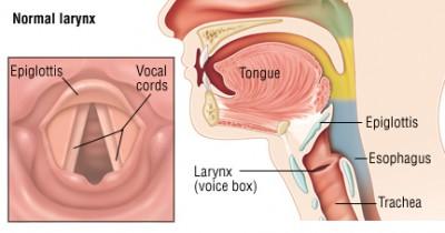 3 Fungsi Pita Suara pada Manusia