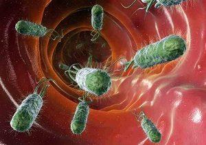 Manusia dengan Bakteri E. Coli