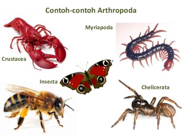 Ciri-Ciri Filum Arthropoda – Habitat – Peranan – Contoh – Sistem Reproduksi