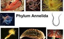 540 Koleksi Gambar Sistem Gerak Pada Hewan Invertebrata HD Terbaik