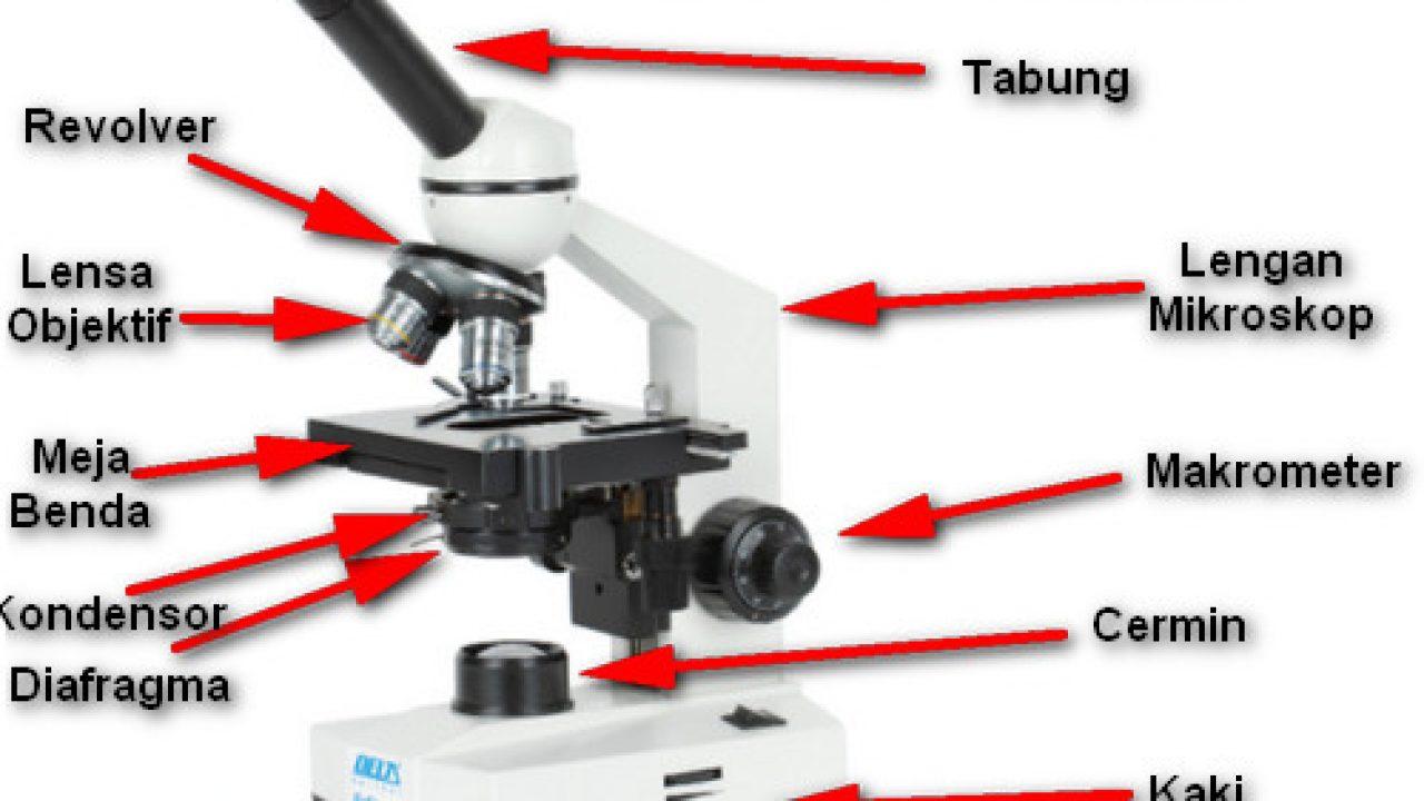 bagian bagian mikroskop elektron dan